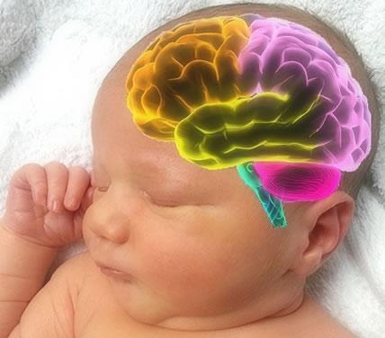 mozek novorozence
