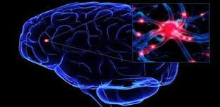 neurony - mozek